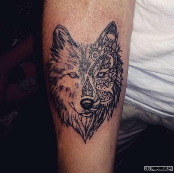 Татуировка волк - 50 фото. Символизм, основное значение, фото и эскизы