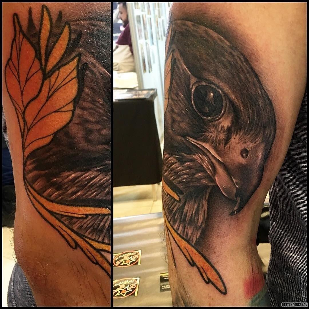 Татуировка сокола на плече фото