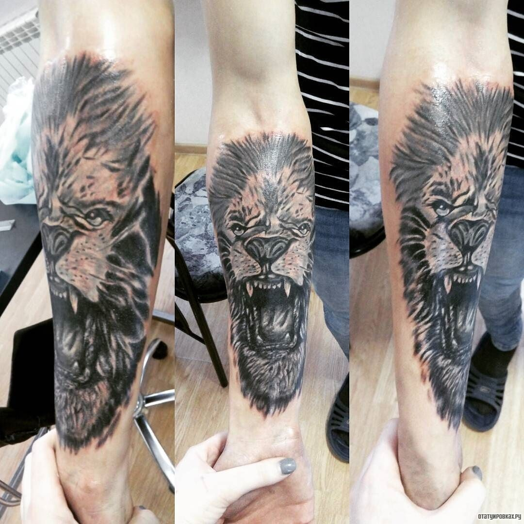 Тату оскал льва на руке