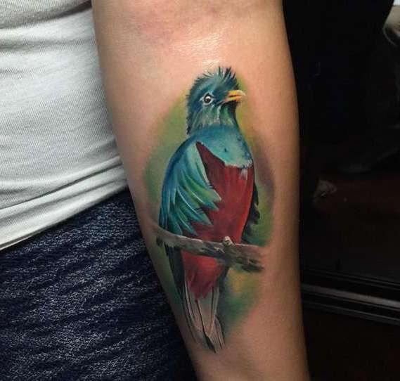 Птица попугай на руке парня