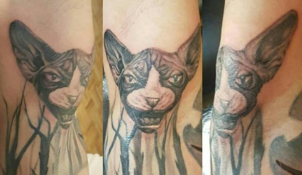 Татуировка кота с поробой сфинкс