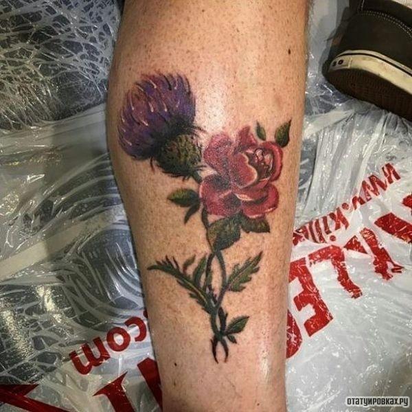 Татуировка чертополох на голени