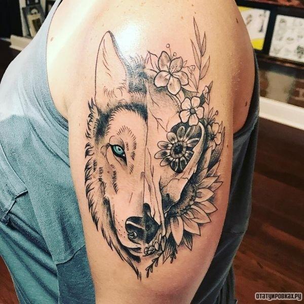 Татуировка Хаски с цветами на плече парня