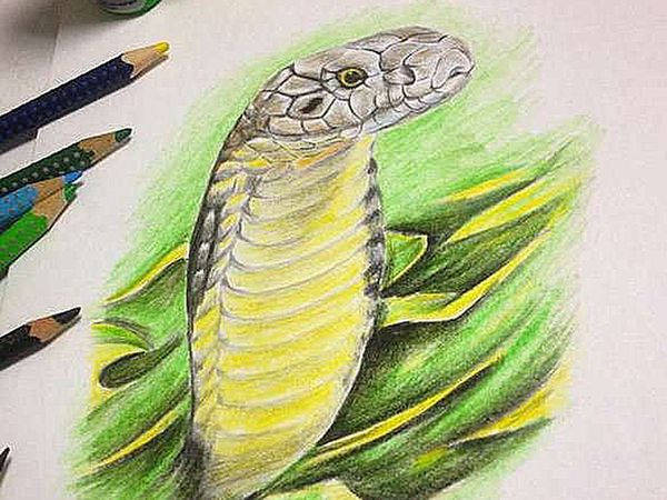 Цветной эскиз кобры