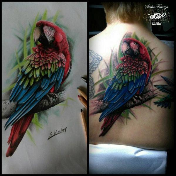 Татуировка + эскиз попугая на спине