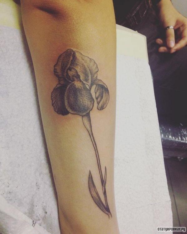 Татуировка ирис