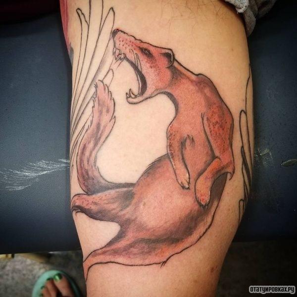 Татуировка мангуст