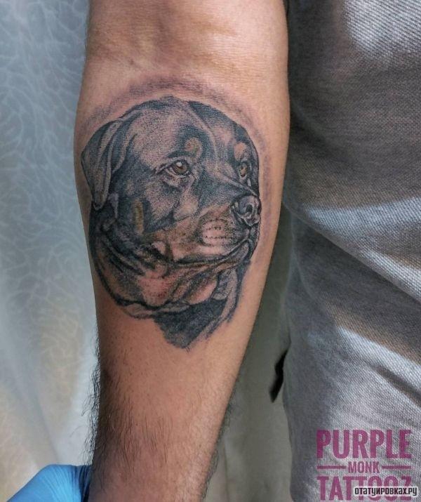 Татуировка ротвейлер