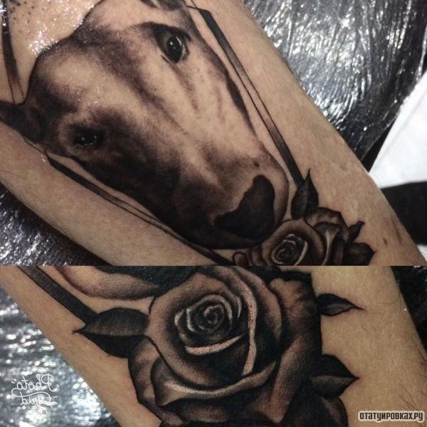 Татуировка бультерьер