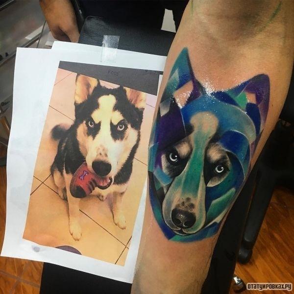Портрет собаки Хаски на руке
