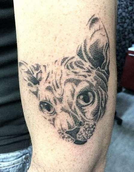 Кошка сфинкс в виде татуировки