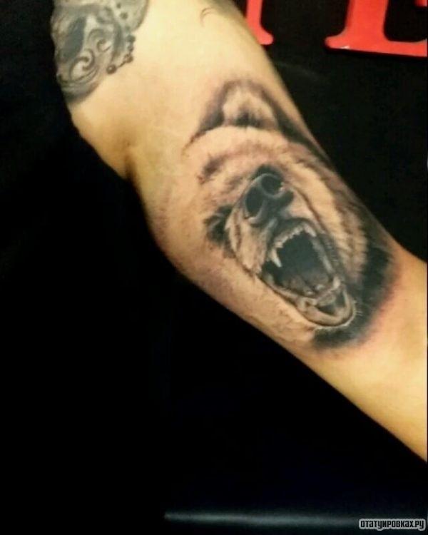 Татуировка гризли