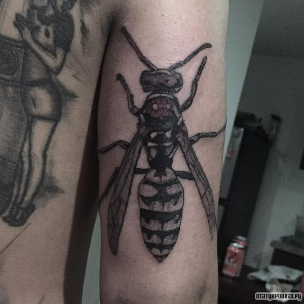 Татуировка оса