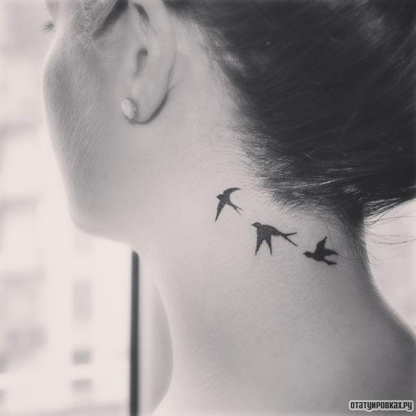 Татуировка стрижи
