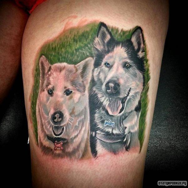 Портрет собаки Хаски в траве, тату на ноге