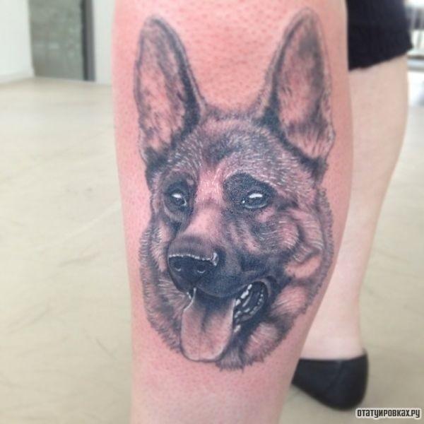 Татуировка овчарка