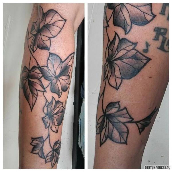 Татуировка плющ
