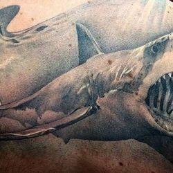фотография тату акула
