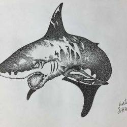 акула эскиз