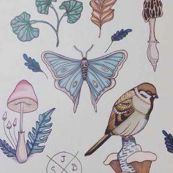 бабочка эскиз