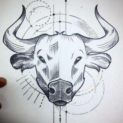 эскиз бык