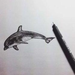 фото, эскиз дельфин