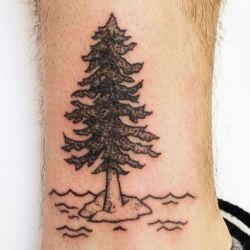фотография дерево