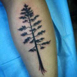 дерево фотография