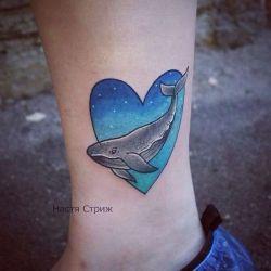 кит фотография