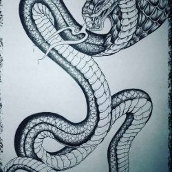 фото, эскиз кобра