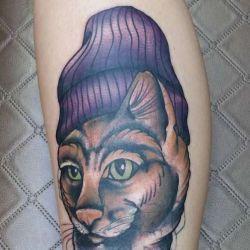 кошка фотография