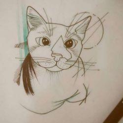 эскиз тату кот