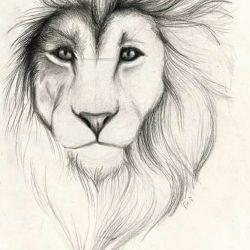 Тату лев эскиз