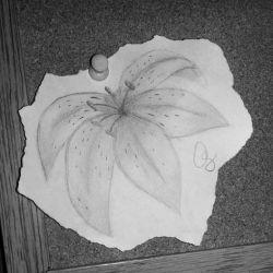 Татуировка лилия эскиз