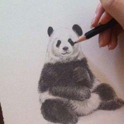 Тату панда фото, эскиз