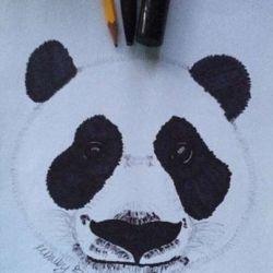 фото, эскиз панда