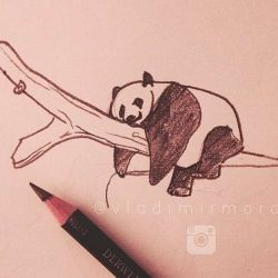 панда фото, эскиз