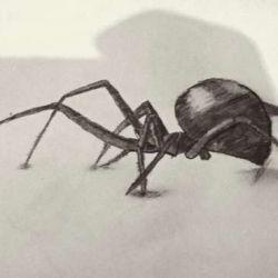 эскиз тату паук
