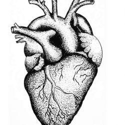 фото, эскиз тату сердце