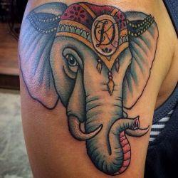 слон фотография