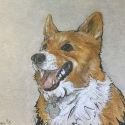 собака эскиз