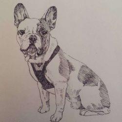 фото, эскиз татуировка собака