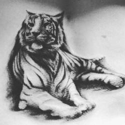 тату тигр эскиз