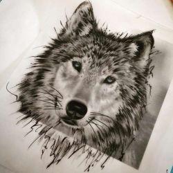 тату волк фото, эскиз
