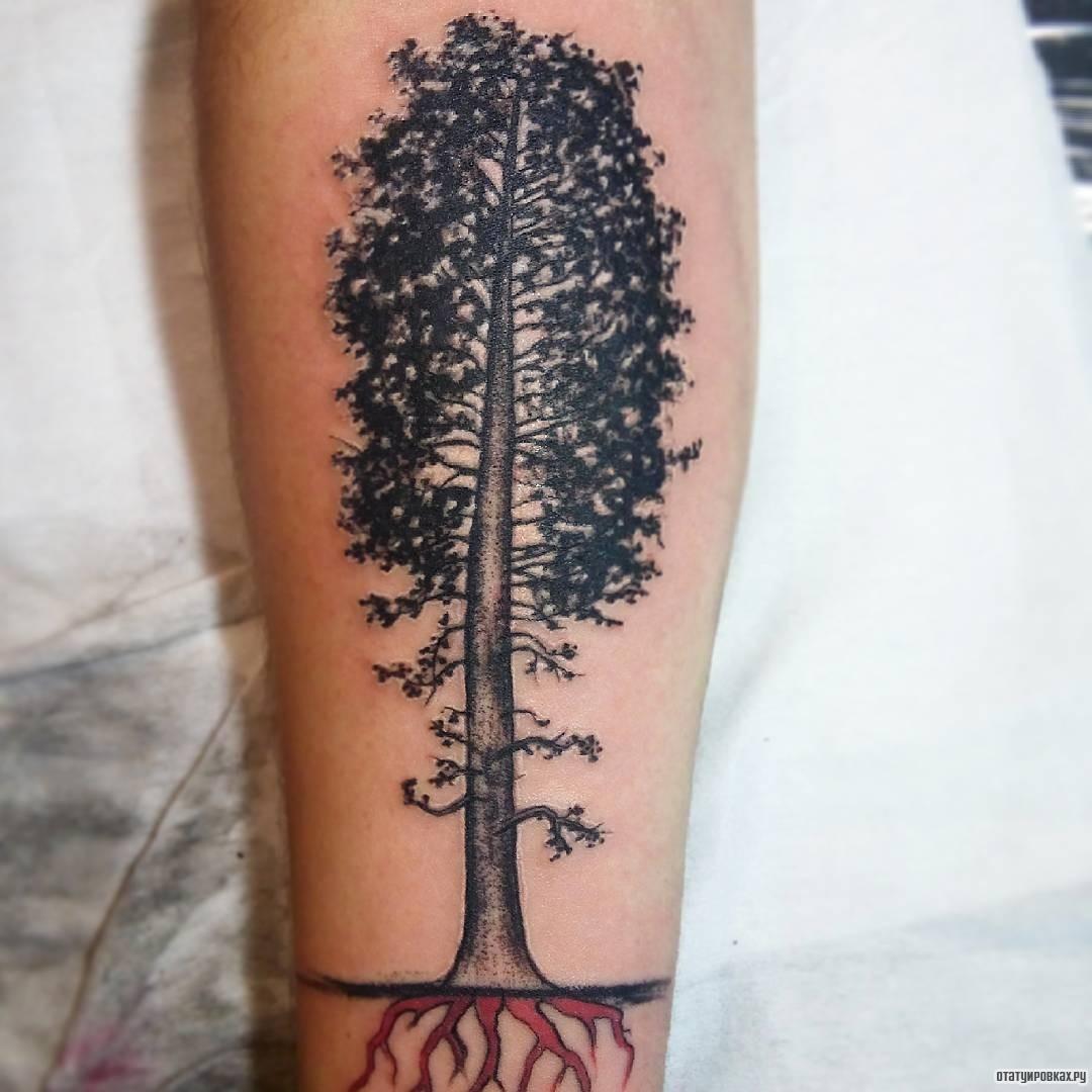 Тату дерево с корнями фото