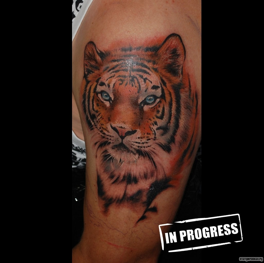 Тату тигра в фото