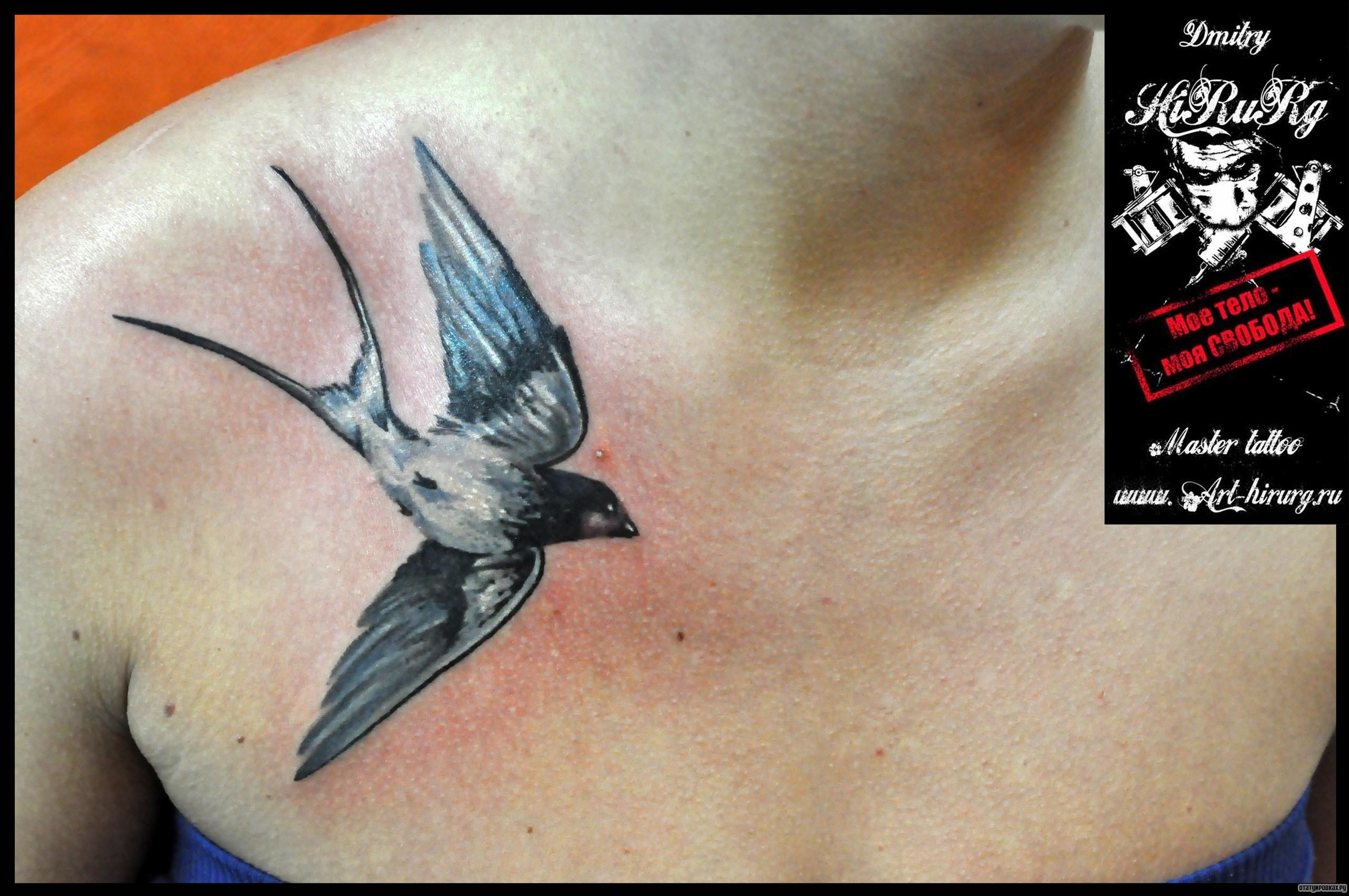 Татуировка ласточка: 50 фото. Символизм, значение и эскизы