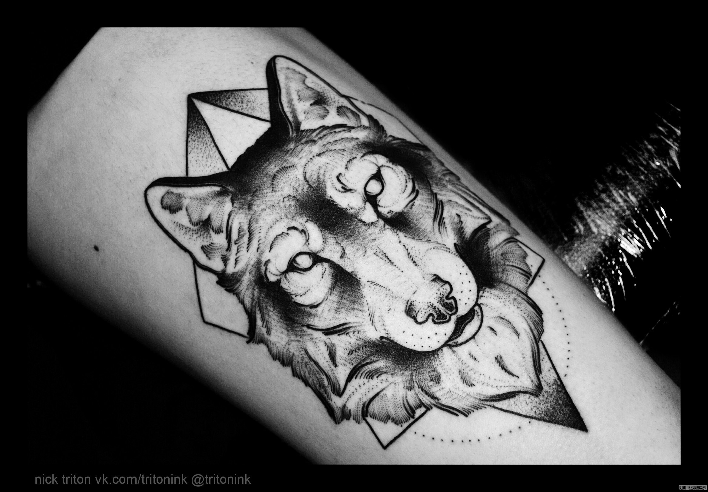 Морда волка татуировка 11