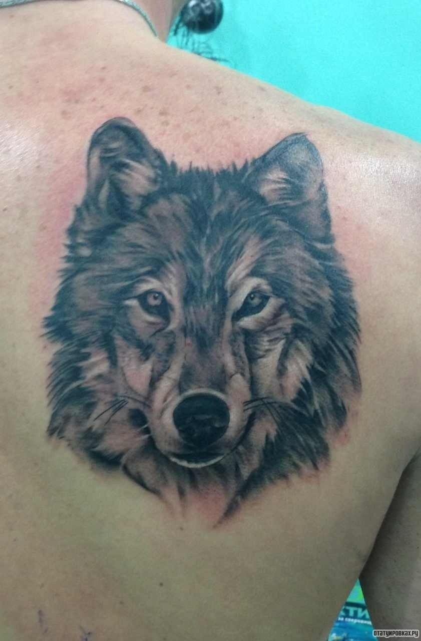 Морда волка татуировка 161