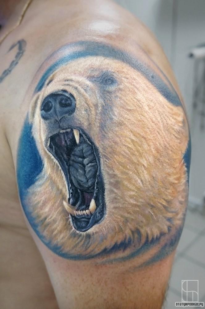 картинки наколки с белым медведем